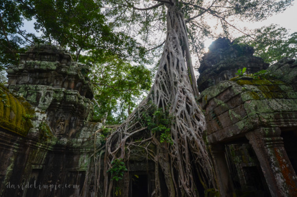 David Olimpio Photography Angkor Wat