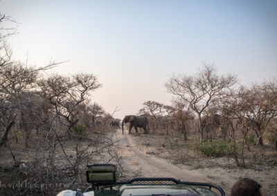 David Olimpio Photography: South Africa Safari - Elephants